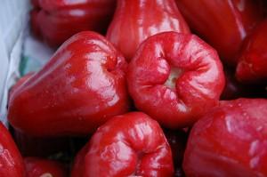 jambu staminali vegetali