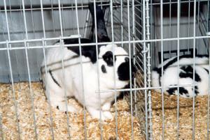 animali gabbia