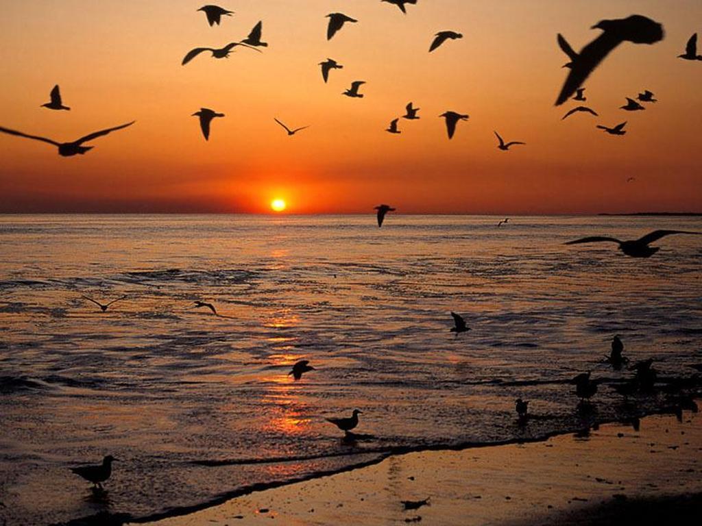 Poesia del tramonto al mare centumcellae news for Disegni di paesaggi di mare