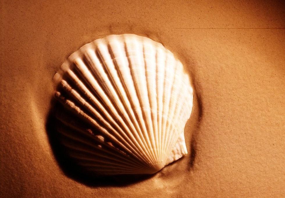 Conchiglia per sabbia