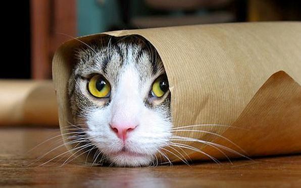 Guardare Il Video Del Gatto Su Internet Aumenta Lenergia E Le
