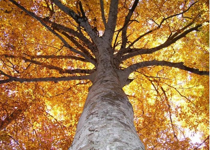 Risultati immagini per sole tra le foglie gialle