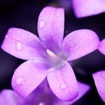 Melancholic-Violet-1920-1080