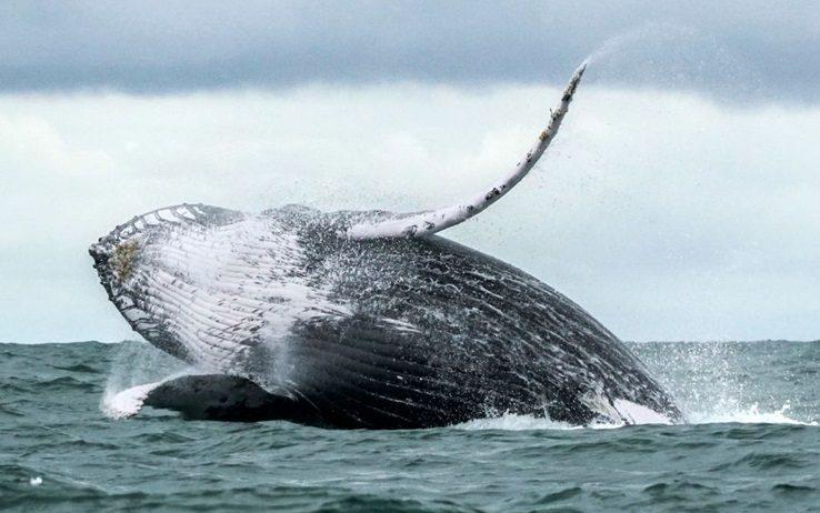 Filippine, trovati 40 kg di plastica in stomaco balena morta - Ambiente & Energia